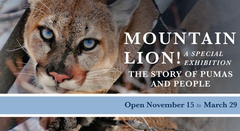 Mtn. Lion Exhibit 2015