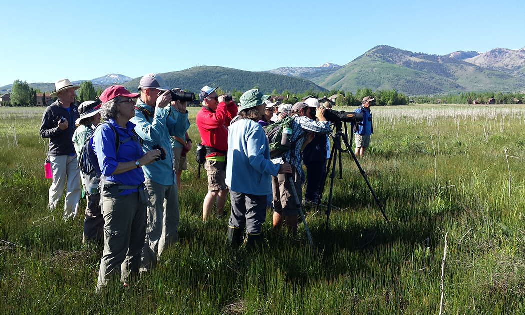 Wetland Bird Walk 2014